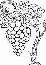 Grape Coloring Pages Coloringway sketch template