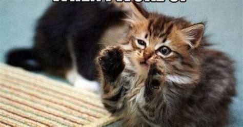 Cat Alien Meme - aliens cat meme animals pinterest aliens meme and cat