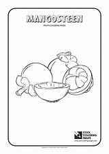 Coloring Mangosteen Pages Guillotine Cool Template Fruits Loquat sketch template