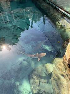 Ultimate Guide To Discovery Cove In Orlando