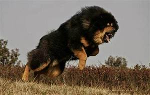 Top 10 Strongest Dogs In The World - Exploredia