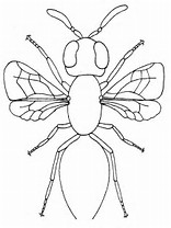 HD Wallpapers Coloring Page Insect Body Parts