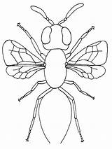 Bug Coloring Insect Pages Printable Parts Firefly Realistic Bugs Insects Bestcoloringpagesforkids Cartoon Getcolorings Templates Template sketch template