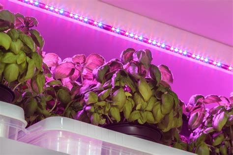Artificial Light For Plants by Growing Plants With Artificial Lights Thriftyfun