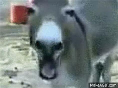 laughing donkey    gif