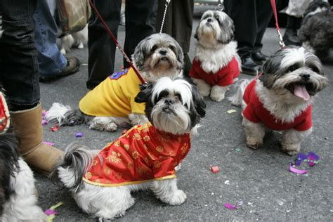Doggies In  Chinatown Nyc Lunar New Year Parade Flickr