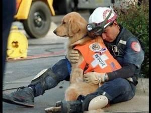 Perros de Búsqueda y Rescate,Los Perros de Peleas , Los ...