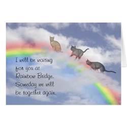 the rainbow bridge poem for cats cats waiting at rainbow bridge zazzle
