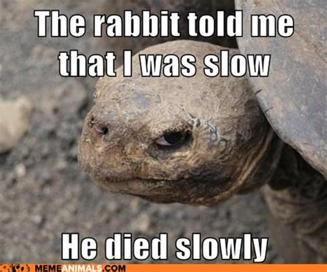 funny tortoise pictures