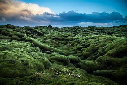 Ireland Hills Moss Porras Nieto Photographer Plant