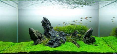 great simplistic idea fish aquariums nature aquarium