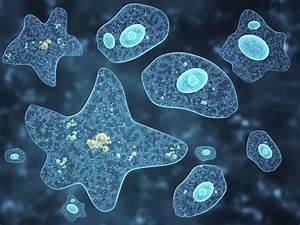 Complete O  L Notes Biology  Chp 5 Amoeba
