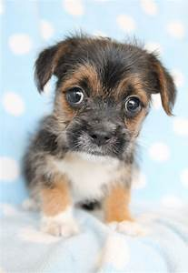 small breed family dogs
