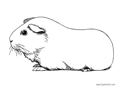 guinea pig coloring pages black  white  printable