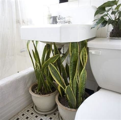 Pot Plants For The Bathroom by Best Plants That Suit Your Bathroom Fresh Decor Ideas