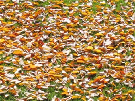 tapis de feuilles mortes photo tapis de feuilles mortes