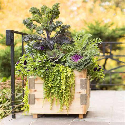 easy planter boxes potted plants