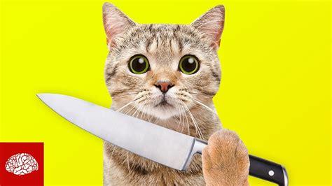 Search For Katz sind katzen gnadenlose killer
