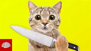 Katzen Fernhalten Von Möbeln : sind katzen gnadenlose killer youtube ~ Sanjose-hotels-ca.com Haus und Dekorationen