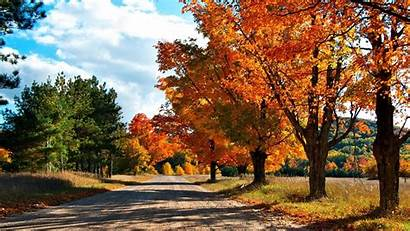 1080p Autumn Wallpapers Background Leaves Trees Yellow