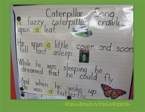 19 best images about butterflies 1st grade 697 | ada77012580c27f857adcee091be35ae kinder science kindergarten science