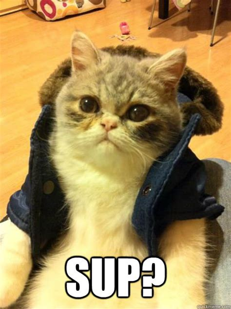Unamused Meme - unamused cat meme