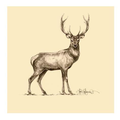 deer sketch google search art deer drawing draw