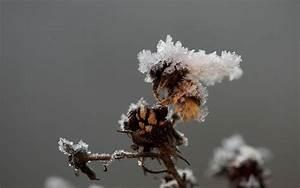 Wie überwintern Bienen : deutsche wildtier stiftung was machen wildbienen und wespen im winter ~ A.2002-acura-tl-radio.info Haus und Dekorationen