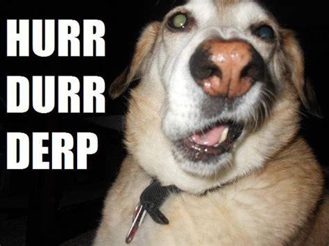 Derp Dog Meme - bellaand friends