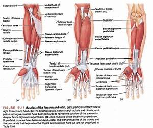 1000 Images About Anatomy Physiotherapy On Pinterest