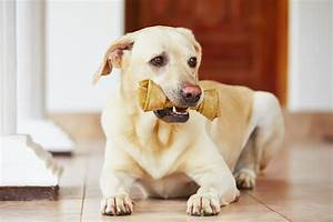 Dog bones could be deadly for your pet, FDA warns ...