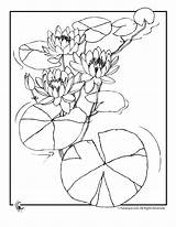Lily Coloring Pads Pad Drawing Water Flower Pages Print Printer Send Button Special Getdrawings Only Comments sketch template