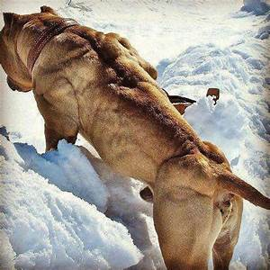 Is that dog on steroids?! | Sportholic | Pinterest