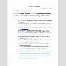 Energy Flow In Ecosystems  Science 10 Worksheet#3 Energy Flow In Ecosystems 1 Match The