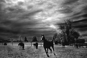 Horses Running Black White Surreal Nature Landscape ...