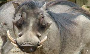 Los diez animales más feos del mundo Qué es