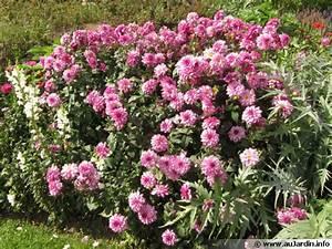 Bulbes D été : plantation des bulbes d 39 t ~ Melissatoandfro.com Idées de Décoration