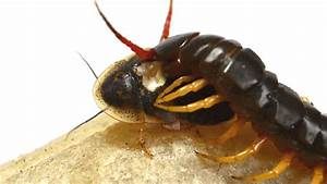 Cockroach GIF - Find & Share on GIPHY
