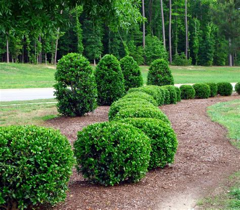 landscaping shrubs and bushes pictures trees shrubs merrill landscaping