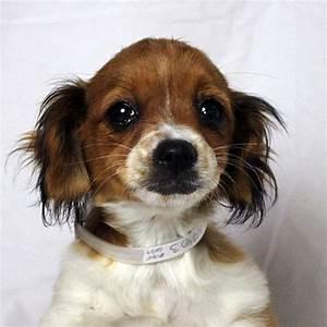 20 dogs second chance adoption thanks san g