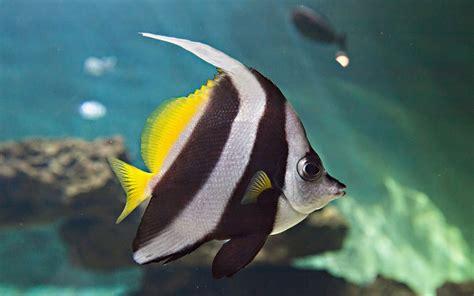 aquarium le 7 232 me continent aux alentours et excursions des sables d olonne en vend 233 e