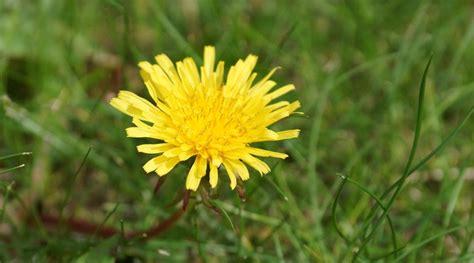 Rasen Wird Gelb. Flug Ber Ein Mdchen Liegt Auf Einem Grnen