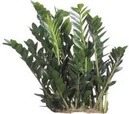 Tropical Indoor Plants Low Light