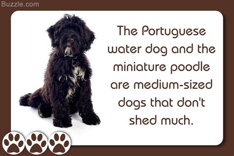 that don t shed much medium sized dogs that don t shed much and won t make you