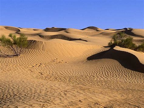 carlos  year work desert lanscape