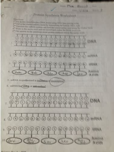 protein synthesis worksheet answer key enzymes dna and protein synthesis matt boward s aice