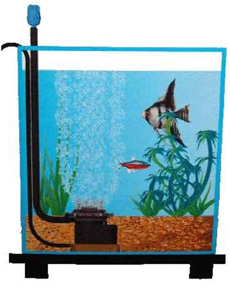 installation pompe a air aquarium guppy refs pompe air et bulleur aquarium