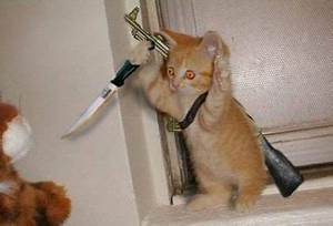 Funny Animals Zone: Funny Kittens With Guns Amazing