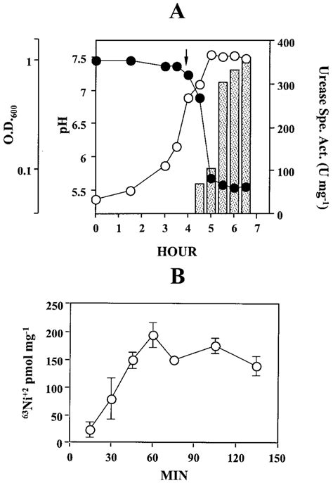 (A) Growth, urease expression, and culture pH versus time