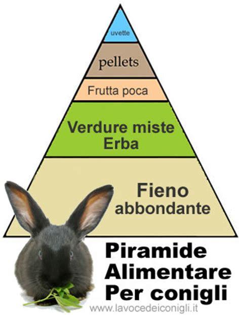 alimentazione dei conigli alimentazione